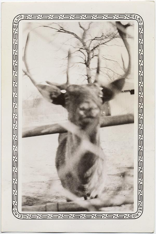 fp10305(Deer-Head-Behind-Wire)