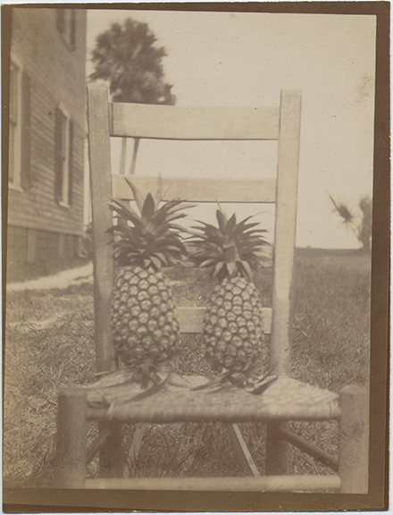 fp6439(Pineapples_Chair)