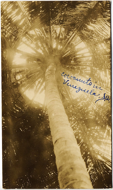 STUNNING ABSTRACT COCONUT PALM TREE VENEZUELA SUN FILTERS THROUGH FRONDS UNUSUAL