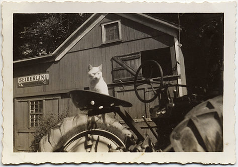 FABULOUS FARMER WHITE PUSSY CAT PERCHED on SEAT of VINTAGE TRACTOR Sieberling
