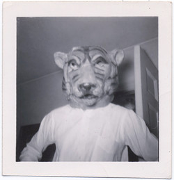 fp4913(TigerMask)