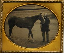 (DG-Horse-Trainer)
