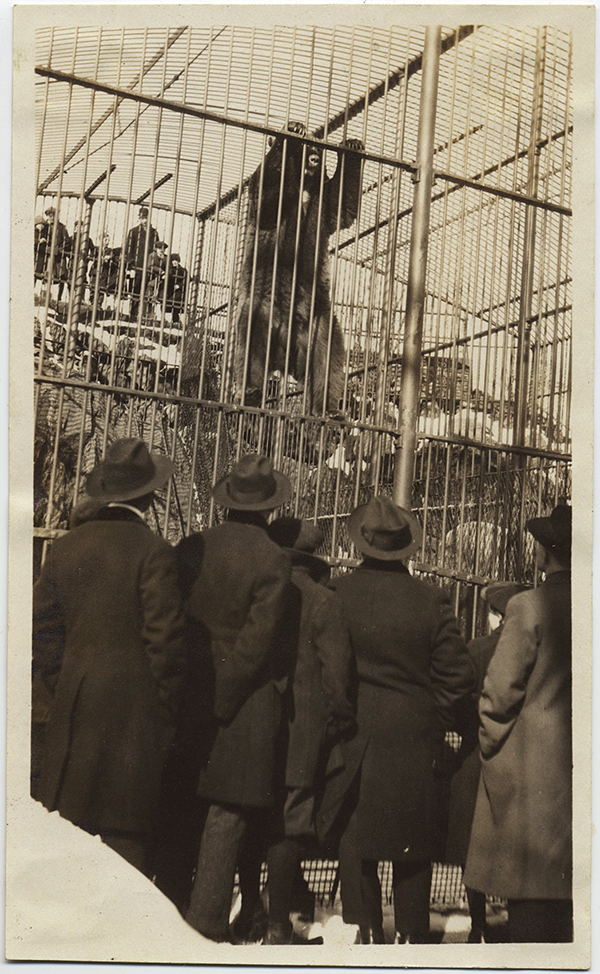 fp10370(Bear-Climbin-Zoo-Spectators)