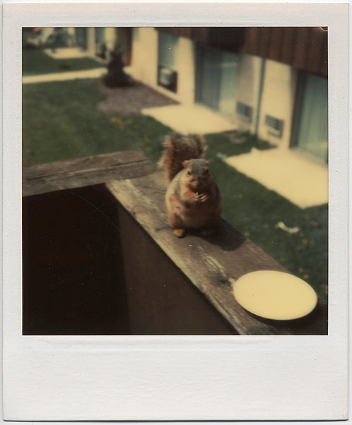 CUTE ADORABLE SQUIRREL CHOWS DOWN from SAUCER POLAROID