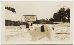 fp4390(Dog_Hand_Leash_Billboard)