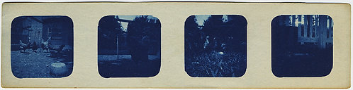CYANOTYPE STRIP!  Rare & UNUSUAL! Chickens & FOWLS