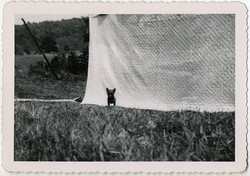 fp1706 (tiny-dog-quilt)