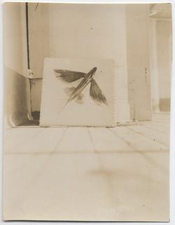 fp4623(FlyingFish_Mounted)