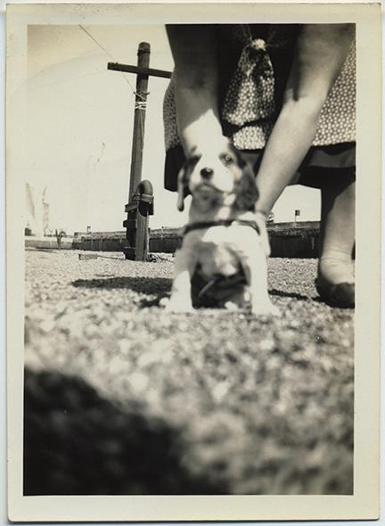 fp5851(Woman&Dog_GroundLevelShot)