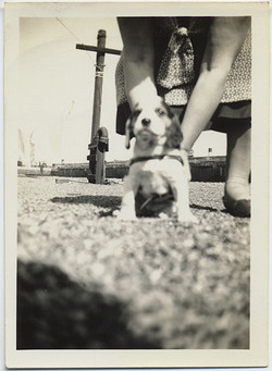 fp5851(Woman&Dog_GroundLevelShot)