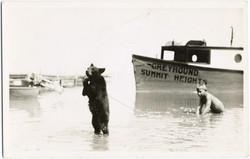 fp2094 (Bear-in-Sea)