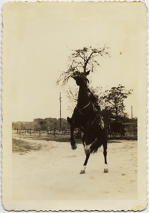 REARING BUCKING BRONCO HORSE w RIDER HOLDING ON on DIRT ROAD