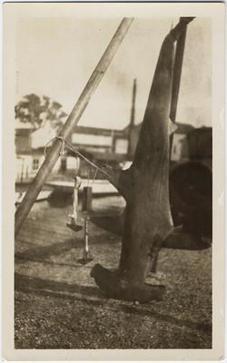 fp10537(Hammerhead-Shark)