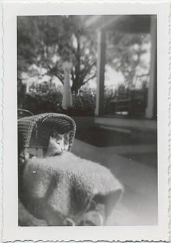 fp6070(CatInCarriage_Blanket)