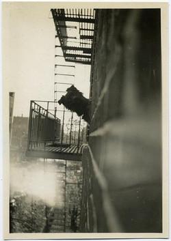 fp1940 (Dog-Tenement)