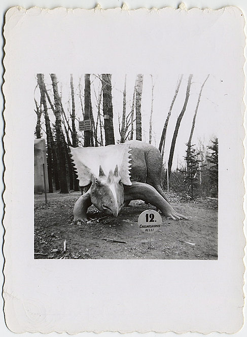 #12 TRICERATOPS DEMANDS YOUR ATTENTION in DINOSAUR PARK