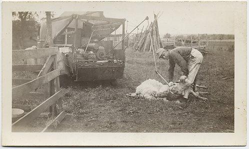 UNUSUAL SHEEP SHEARING MAN CUTS FLEECE w VEHICLE POWERED SHEARING SCISSORS!!