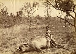 fp0685 (dead buffalo)