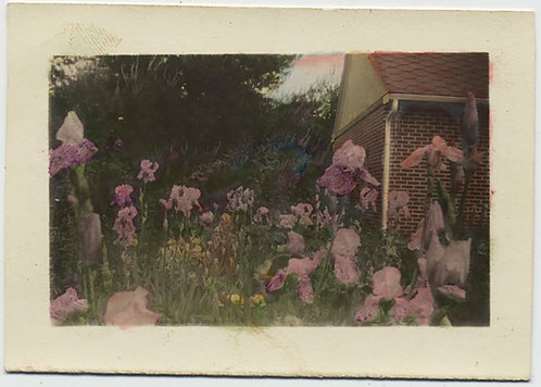LOVELY DELICATELY HAND TINTED COLORED FLOWERS in GARDEN