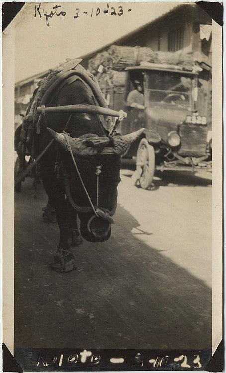 CART OX BULL in YOKE in KYOTO JAPAN 1923 UNUSUAL ROUND the WORLD TRIP