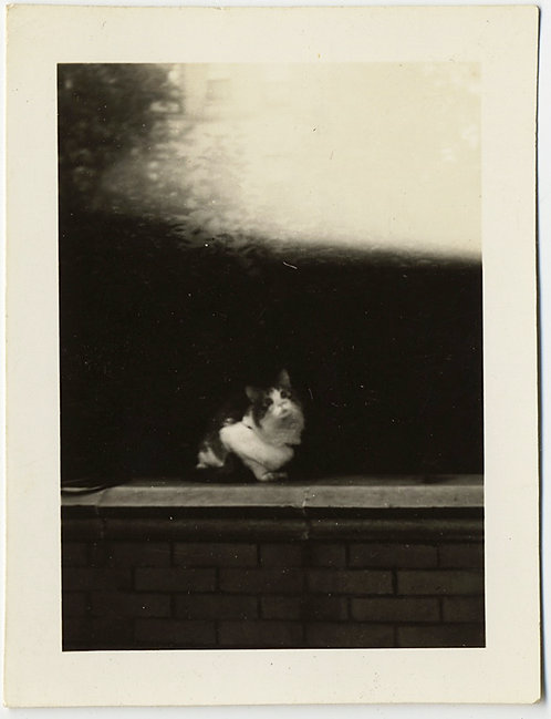 CUTE KITTY CAT on LEDGE w INTERESTING BACKGROUND