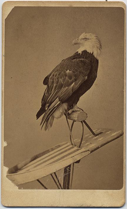 fp5631(CDV_CentennialPhotographCo_OldAbeTheLiveWisconsinWarEagle_AmericanFlag_Patriotism)
