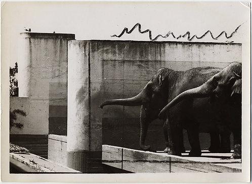 MODERNIST ELEPHANTS w CRAZY APPROPRIATE INTERESTING PRESS MARKUP MARKS