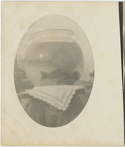 STRANGE DOUBLE IMAGE RPPC w FISH inBOWL and COW CALF in FIELD