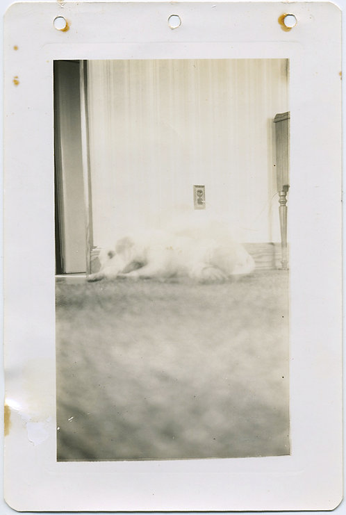 WONDERFUL! GHOST DOG from low angle! IMPRESSIONIST
