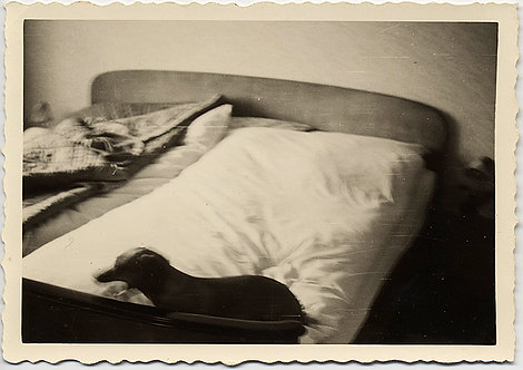 UNUSUAL BLURRY DACHSHUND on UNMADE BED in IMPRESSIONISTIC MYSTERIOUS PHOTO