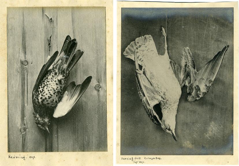 fp0894+combo(dead_brds-1891)
