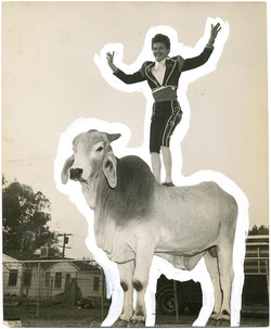 fp1360 (woman stands on bull)