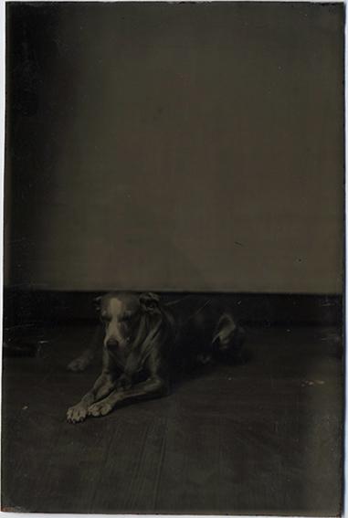 fp3517(TT_Dog_WoodFloor)