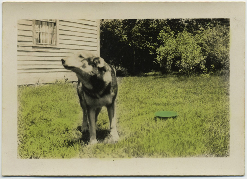 fp8252(Dog-Tinted-Lawn)