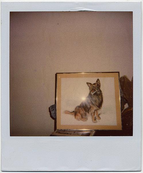 FABULOUS POLAROID of ARTWORK DEPICTING PET DOG GERMAN SHEPHERD