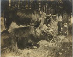 Getrude Käsebier