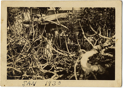 BIZARRE PHOTO of PEOPLE THROUGH THICKET of BUSH BRANCHES