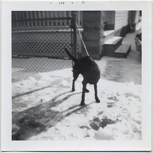 GRAPHIC GREAT SHADOWS and COMPOSITION DOG CHAINED to FENCE in SNOW