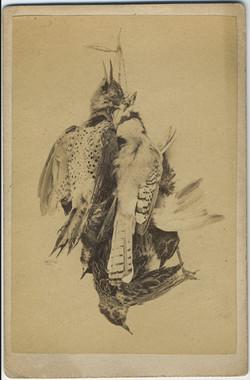 fp5482(CDV_Birds_Entangled_Feathers)