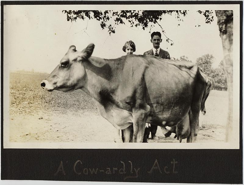 fp10369(Cow-Couple-Caption)