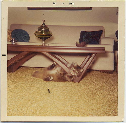 CRAZY CAT GETS STUCK in MID MOD MID CENTURY MODERN TABLE INTERIOR JAN 69