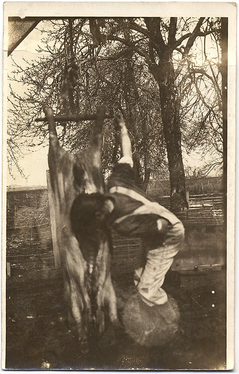STRANGE RPPC YOUNG GIRL? WORKS on BUTCHERING HANGING MEAT CARCASS
