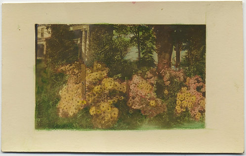 GORGEOUS HAND TINTED HAND COLORED SMALL PIC of FLOWERS FLOWER BED in GARDEN