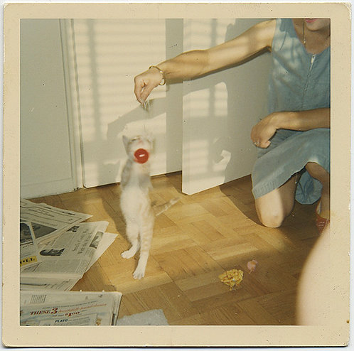 CUTE LITTLE KITTEN JUMPS for RED BALL on STRING HELD  BAD CROP MYSTERY WOMAN