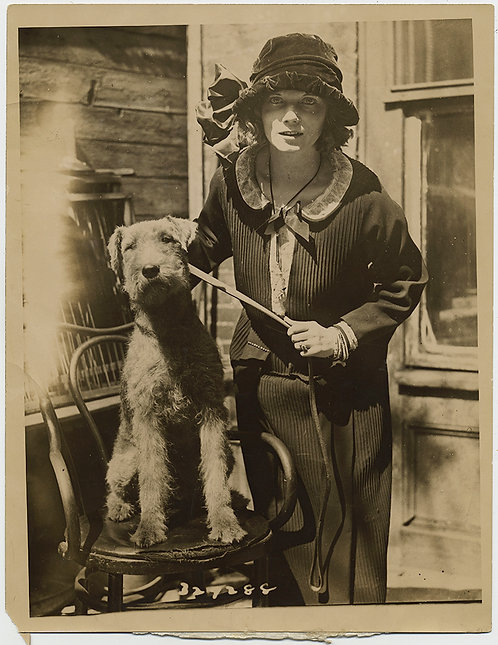 PRESS PHOTO Famous Shimmy STARLET GILDA GRAY & GORGEOUS AIREDALE? DOG TERRIER