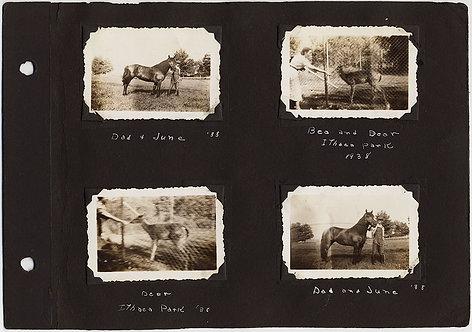 Of HORSES & DEER: ALBUM PAGE Bea & DEER ITHACA PARK HORSE NAMED JUNE KID BUSTER