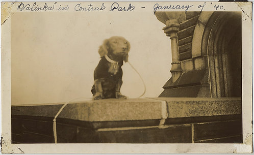 DARLING DOG ADORABLE DACHSHUND VALINKA POSES on STONE LINTEL CENTRAL PARK 1940