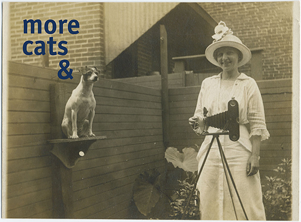 more-cats-&-dogsREV