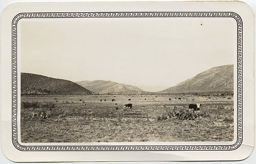 EMPTY BARREN RURAL LANDSCAPE with HILLS and COWS