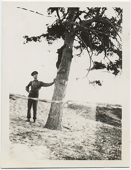 WEIRD UNUSUAL STRANGE MAN WATCHES BEAR CLIMBING up TREE